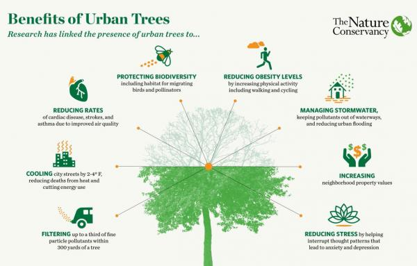 Article image for The benefits of urban trees