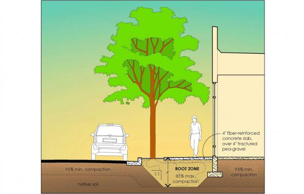 Article image for Root zone: Tips for healthy street trees