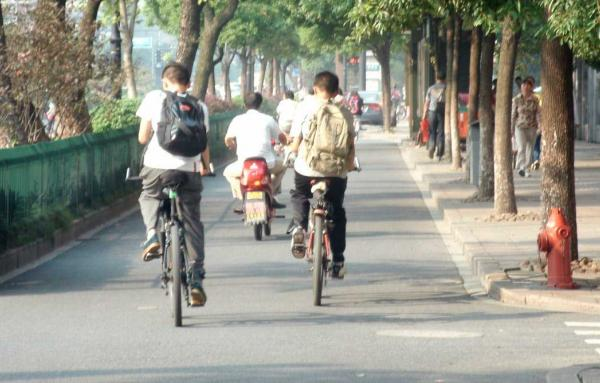 Article image for Are street trees the key to better cycle tracks?