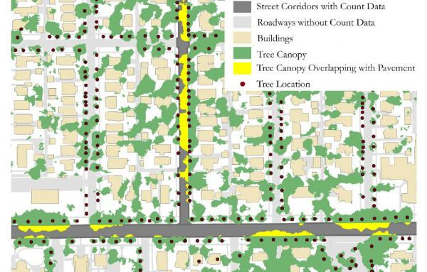 Article image for Tree canopies make us safe; Here's how to grow them throughout cities