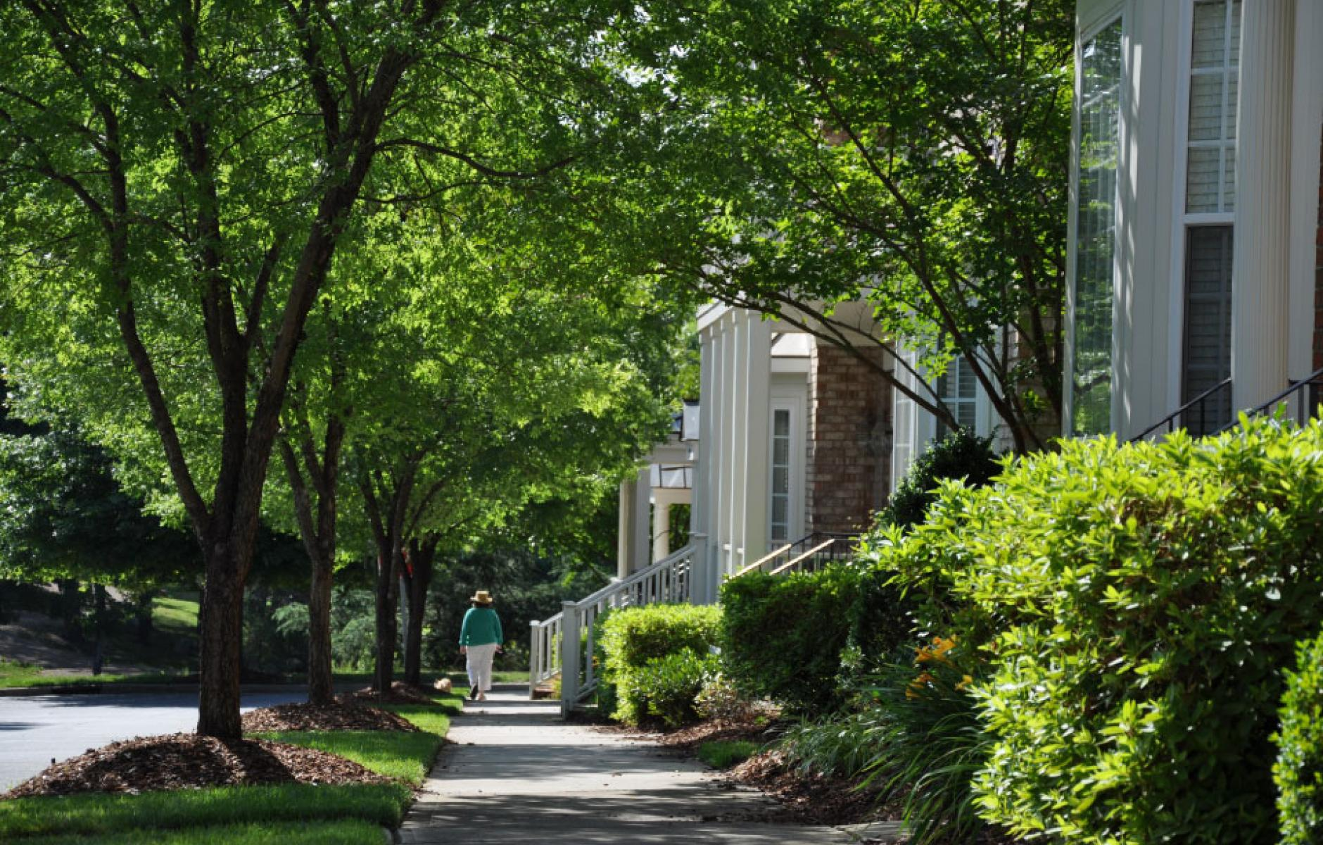 Article image for Street trees: A wonder of climate adaptation